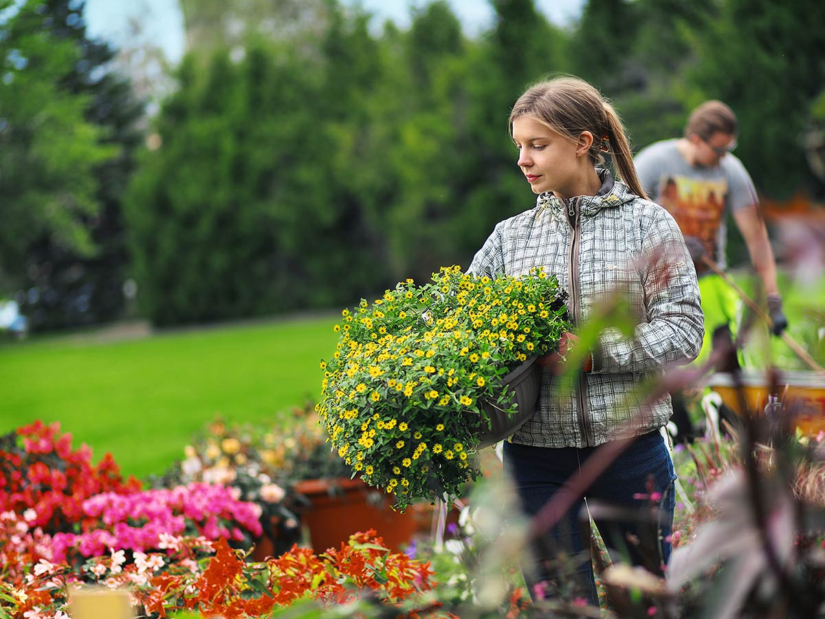puutarhatalous nainen pitaa sylissaan kukkakoria ja katselee kukkasia