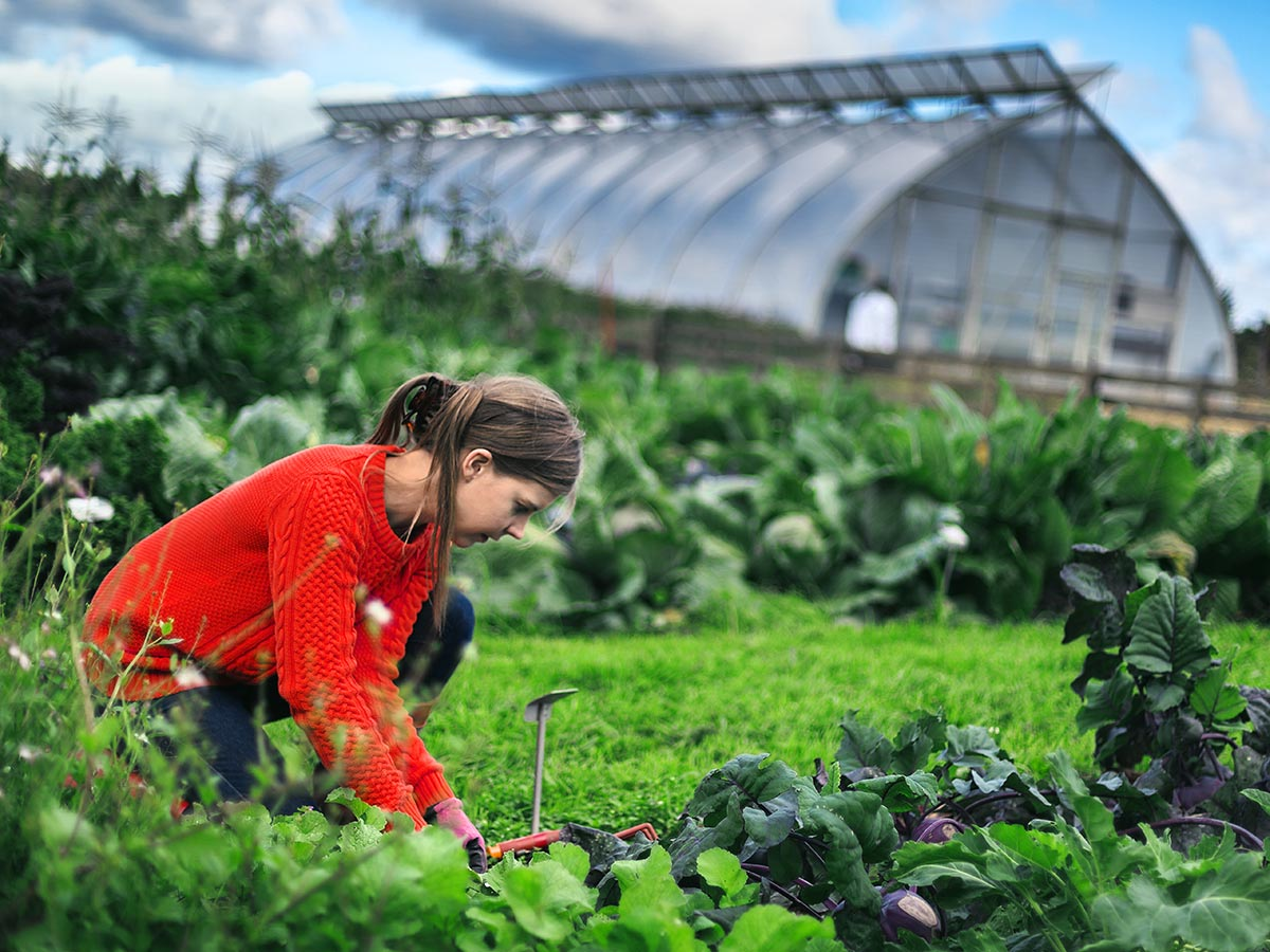 woman working at a vegetable garden