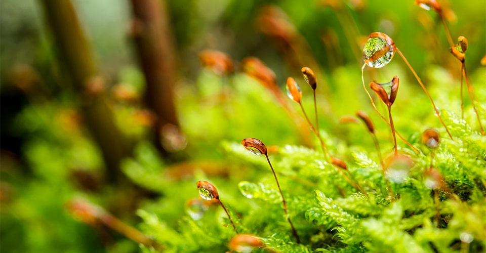 Metsän kasveja