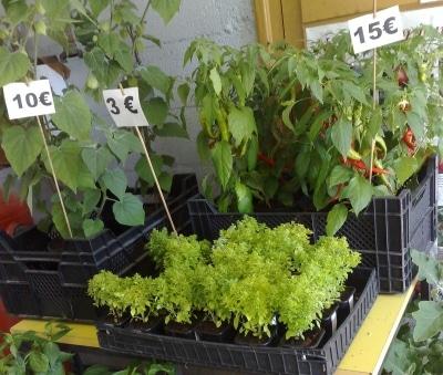 erilaisia taimia esilla myynnissa