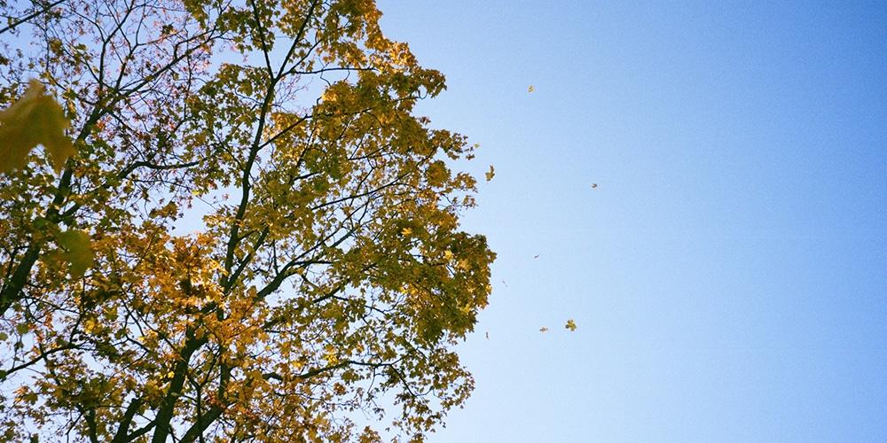 puu ja taivas
