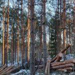 Metsäpuita