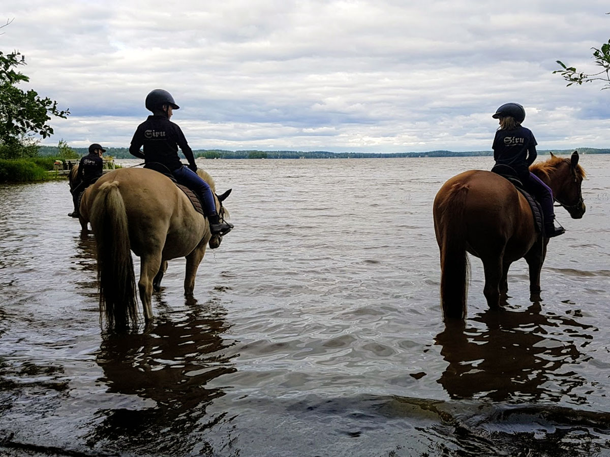 Horses standing in the lake
