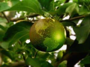 omena maapallokuosissa