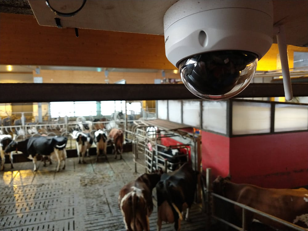 valvontakamera navetan katossa