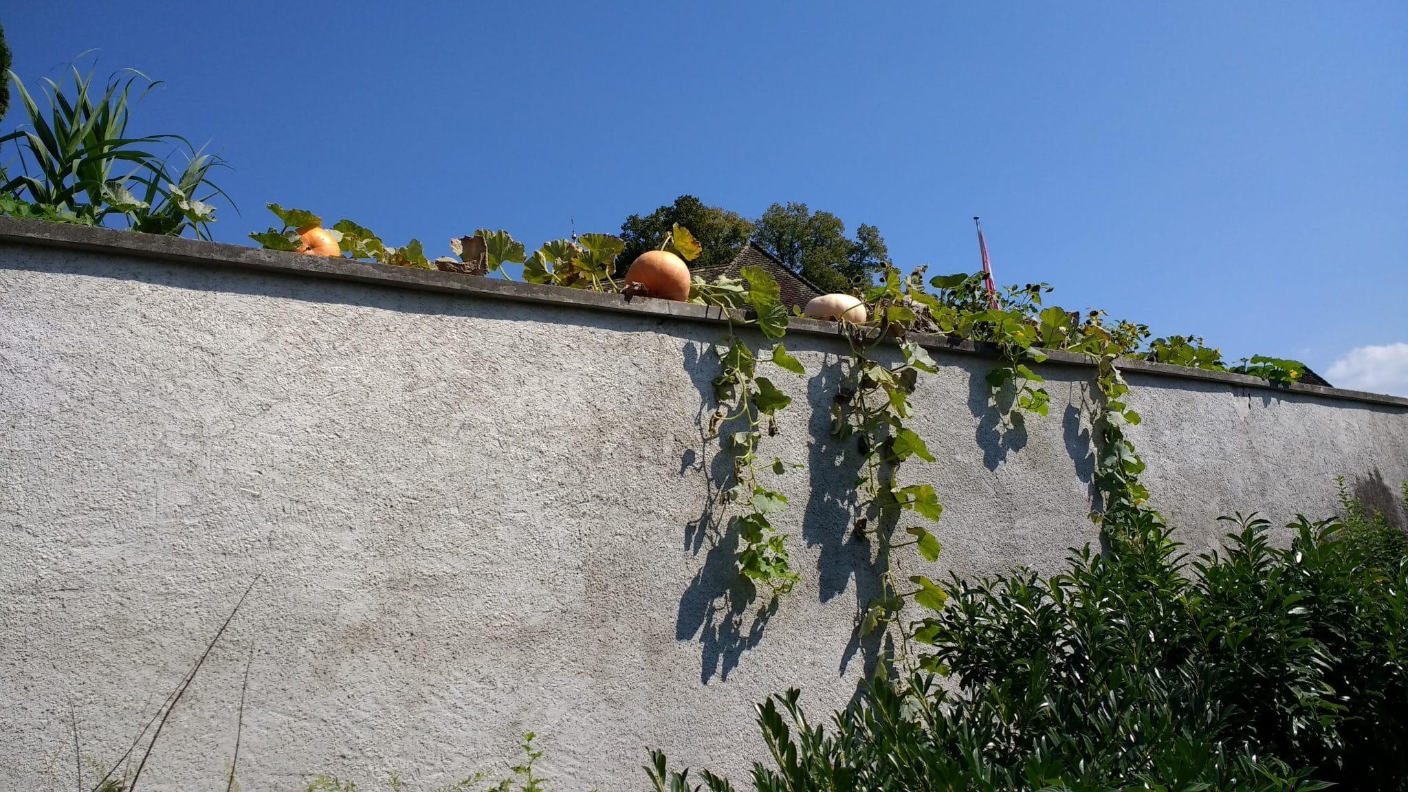 kasveja kaupunkiympäristössä
