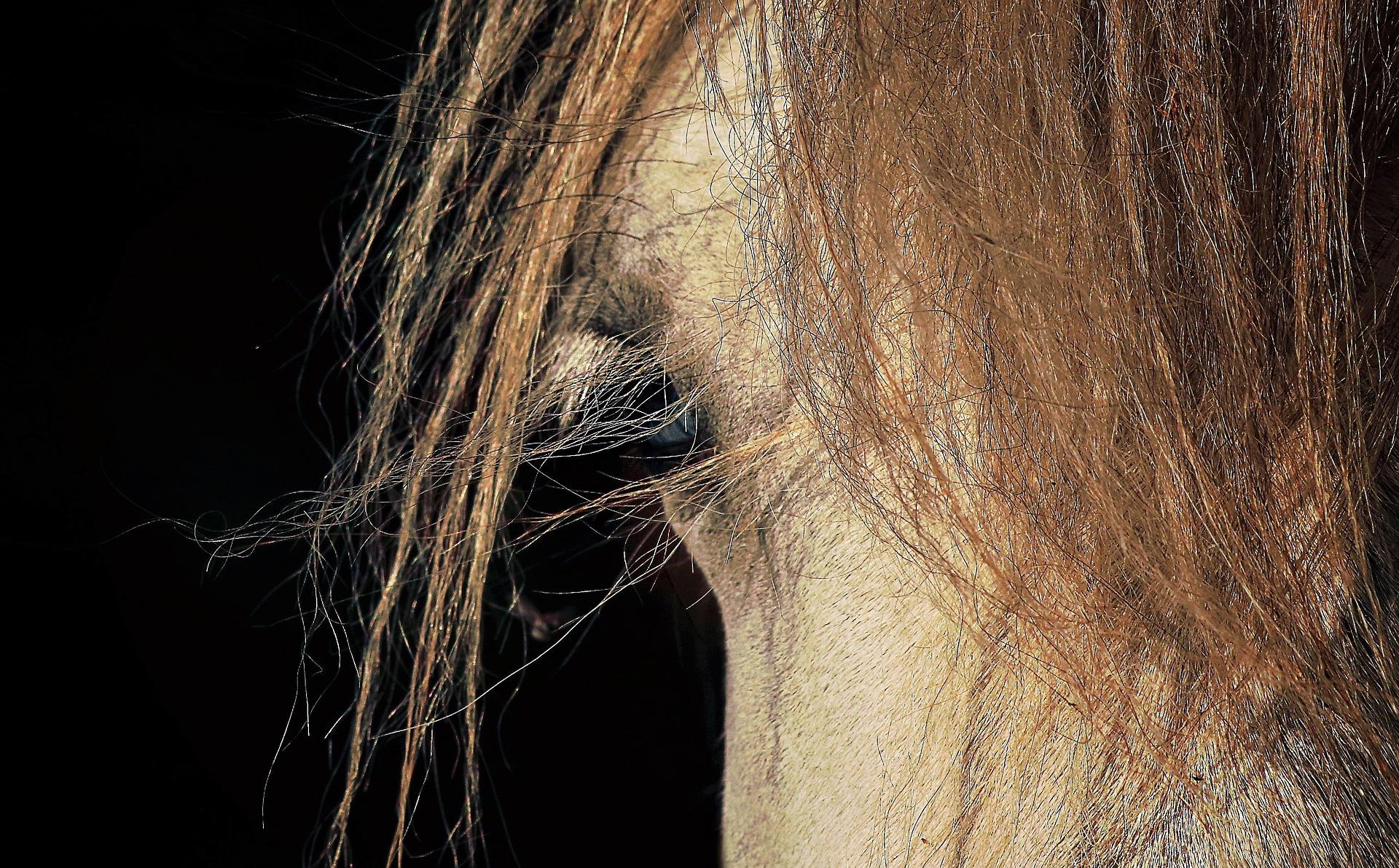 Elämysten hevonen