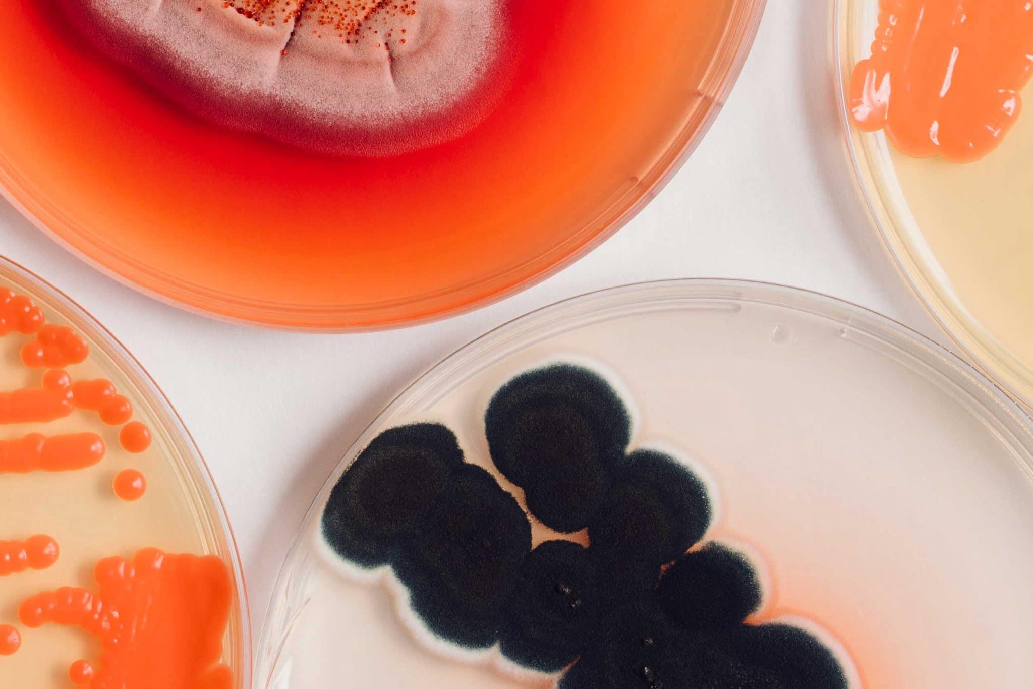 Värikkäitä mikrobeja maljalla