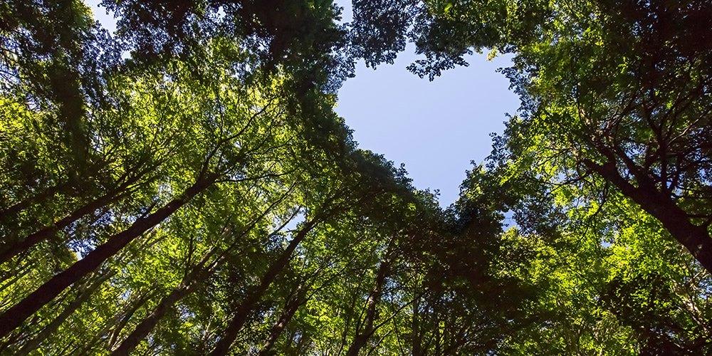 puiden latvojen muodostama sydän