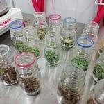 Kasvinäytteitä purkeissa