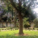 Vehreä piha Sambiassa