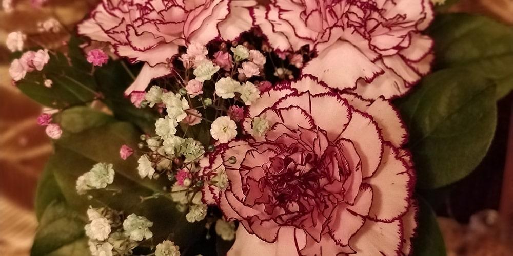 kimppu vaaleanpunaisia neilikoita