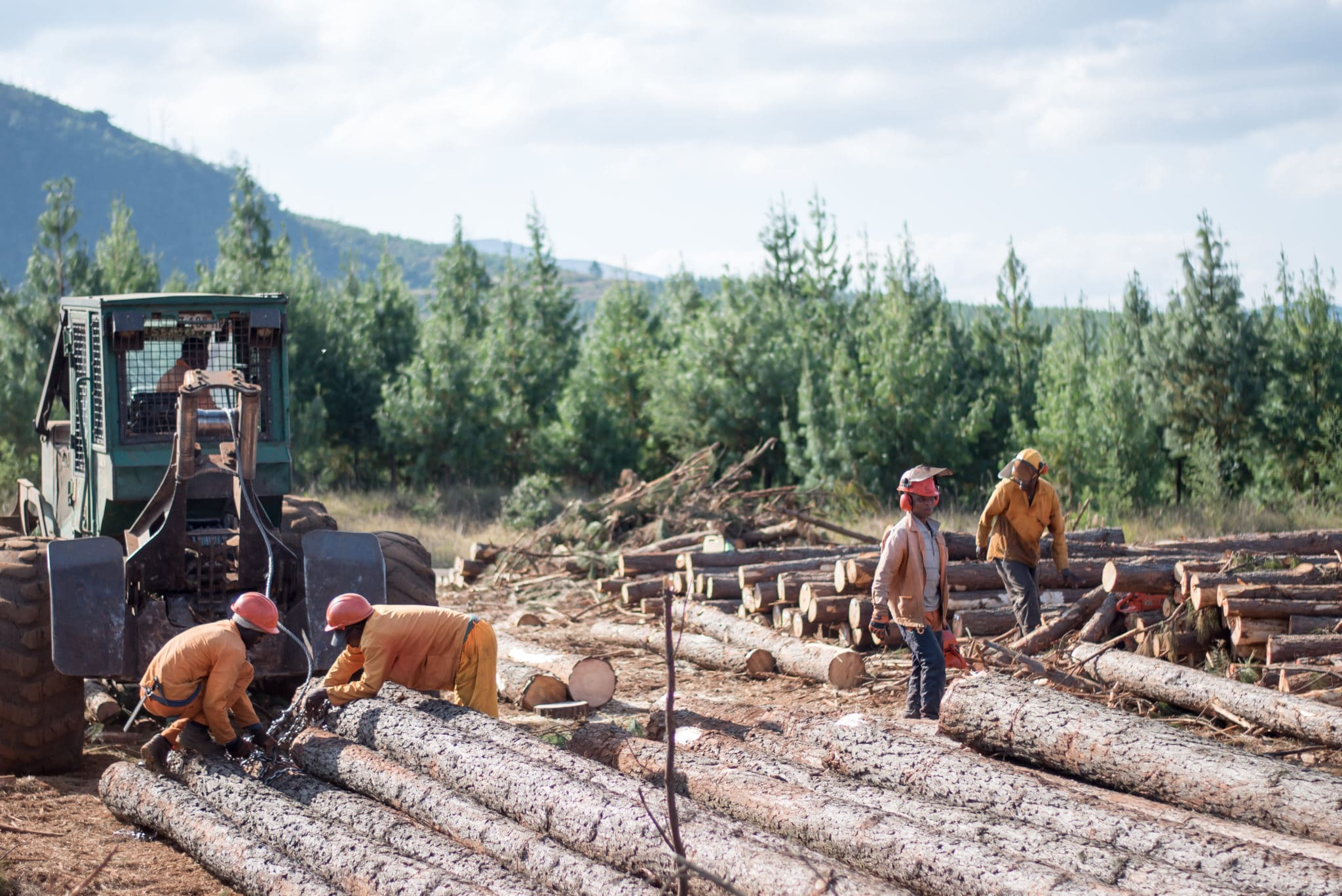 South African people in forestry work