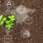 symbolikuvassa kasvia ympäröivä verkosto