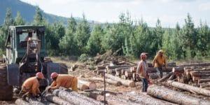 eteläafrikkalaisia metsätöissä